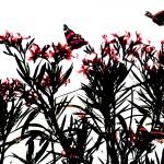 oleander red.jpg